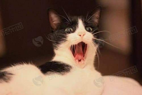 猫咪脾气不好怎么办?如何让它喜欢你?